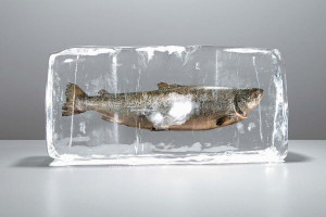 Рассказываем, как правильно замораживать рыбу